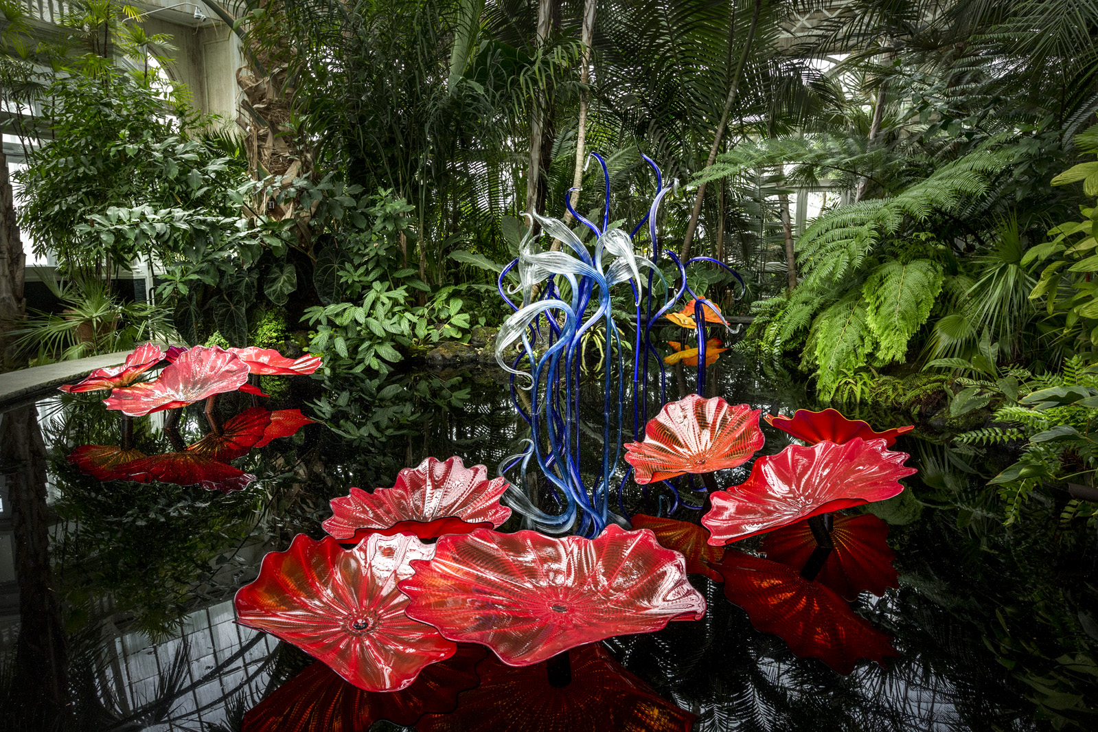 Chihuly At New York Botanical Garden Chihuly